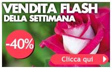 vendita flash piante meilland