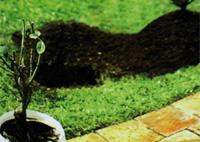 ou planter au jardin