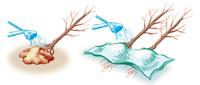 conserver plantes racines nues