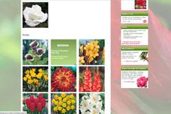 calendrier plantation floraison
