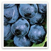 raisin alphonse lavallée