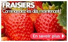 fraisiers automne