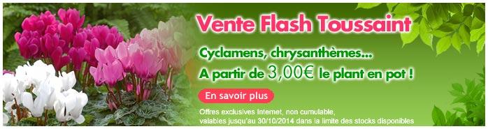 vente flash plantes toussaint