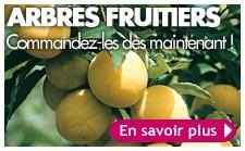 vente d'arbres fruitiers
