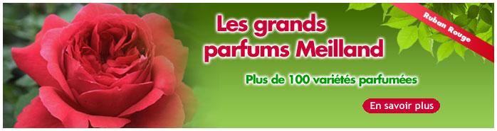 Grands parfums