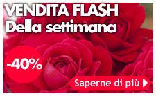 vendita flash meilland