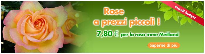Rose a prezzi piccoli