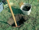 Creuser trou plantation arbuste
