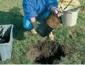 planter arbuste jardin en conteneur