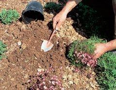nettoyer sol pour planter