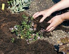 protection sol plantes vivaces
