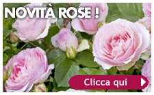 nuove rose