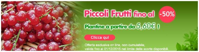Vendita Flash Piccoli Frutti