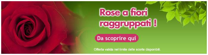 rose a fiori raggruppati