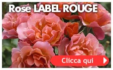 Rose Label Rouge