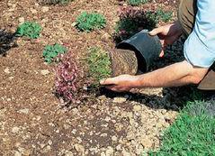 Plantation vivaces