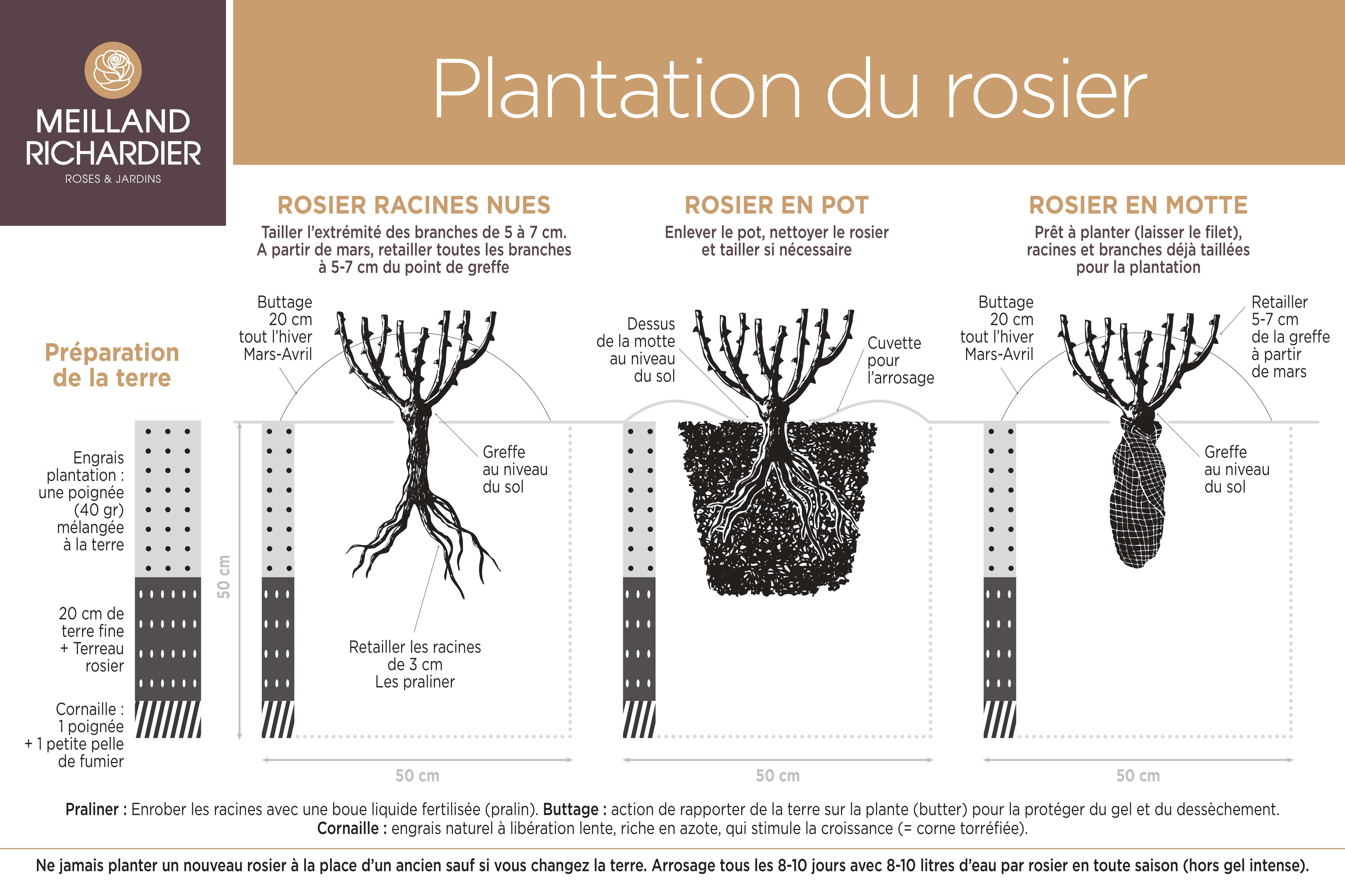 Schéma plantation rosiers