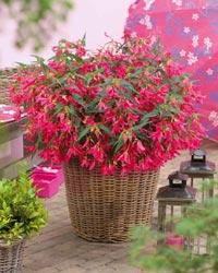 Plantes annuelles plantation et entretien for Acheter des plantes par internet