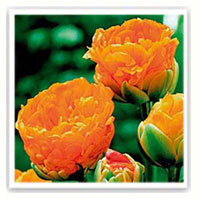 Tulipe conseils de plantation et entretien - Planter des tulipes en mars ...