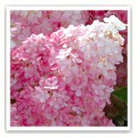 les plantes fleuries  Tableau-8032