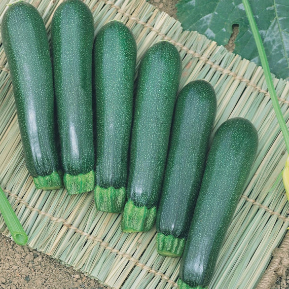 Courgette Anissa HF1