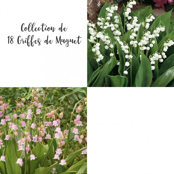 Collection de 18 Griffes de Muguet