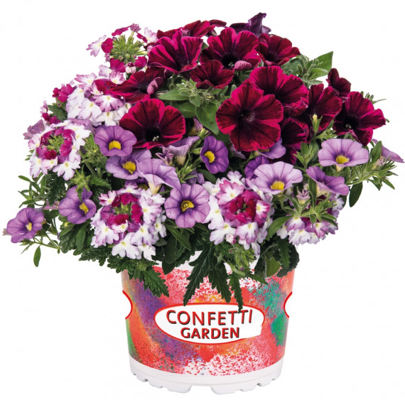 Confetti Garden Shocking Purple