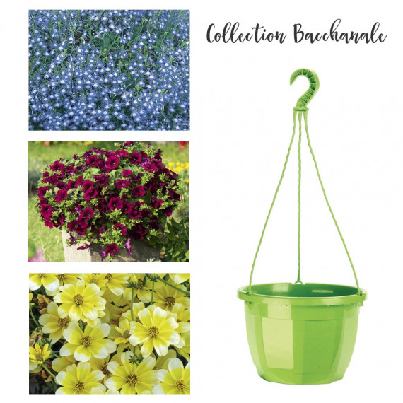 Collection Bacchanale
