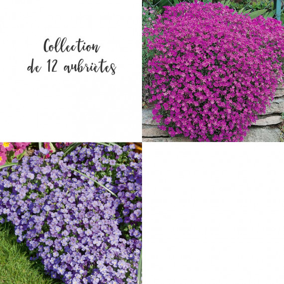 Collection de 12 aubriètes