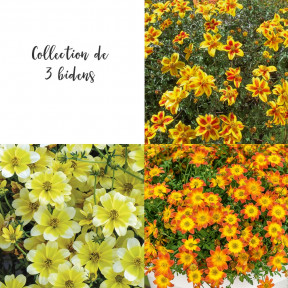Collection de 3 Bidens
