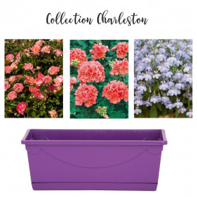 Collection Charleston