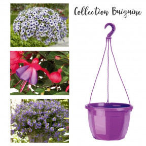 Collection Biguine
