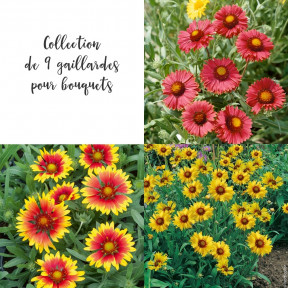 Collection de 9 gaillardes pour bouquets