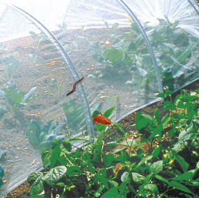 Biocontrol filet anti-insectes
