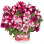 Confetti Garden Shocking Hot Pink