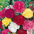 Vente de graines de fleurs