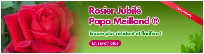 nouveau rosier jubile papa meilland