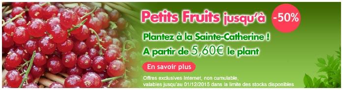 vente flash petits fruits