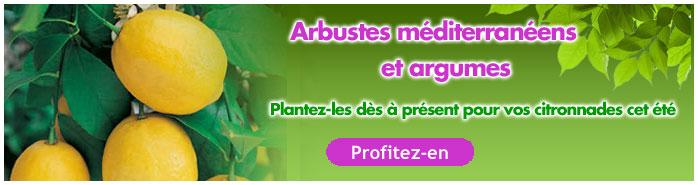 arbustes et agrumes