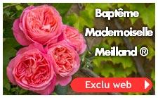 Baptême Mademoiselle Meilland