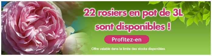 nos rosiers 3L