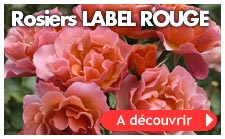 Nos rosiers Label Rouge
