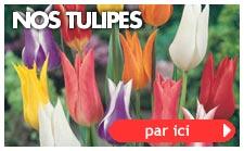 Nos tulipes