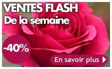 http://www.meillandrichardier.com/promotions/ventes-flash