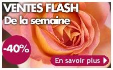 ventes flash plantes