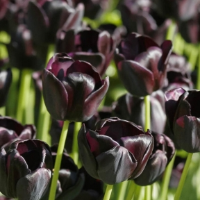 comment obtenir un jardin violet tous nos conseils. Black Bedroom Furniture Sets. Home Design Ideas