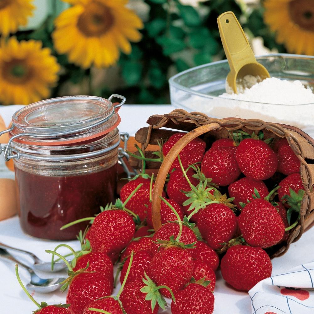 Quel Fruit Planter Au Printemps fraisier : conseils de plantation, taille et entretien