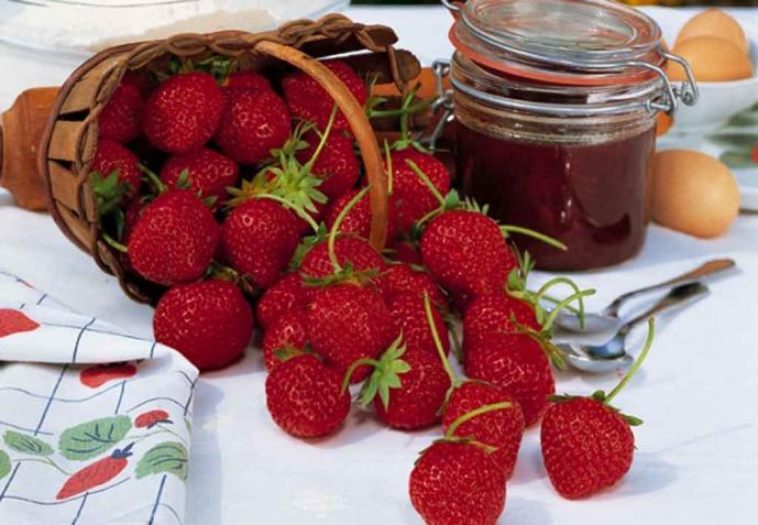 fraisier mount everest en pot gallery of with fraisier mount everest en pot fraisier grimpant. Black Bedroom Furniture Sets. Home Design Ideas