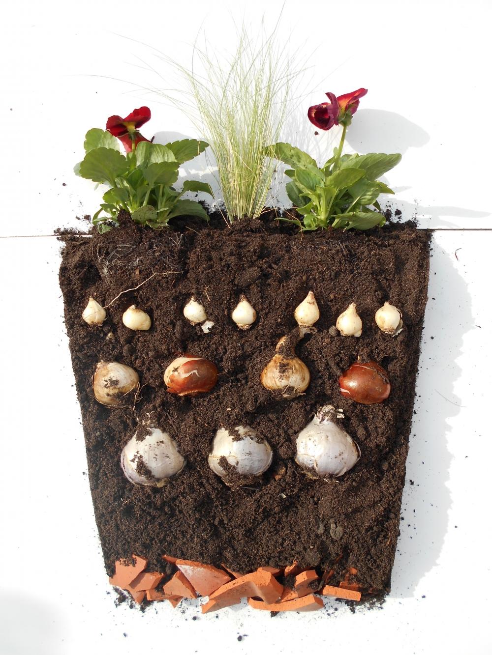 Comment Planter De L Échalote associations de bulbes en pot : comment réussir une