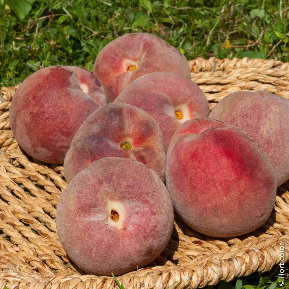 Quel Fruit Planter Au Printemps pêcher : conseils de plantation, taille et entretien